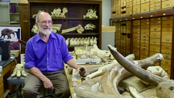 Dr. Daniel Fisher of the University of Michigan museum of paleontology with the Bristle Mammoth find.
