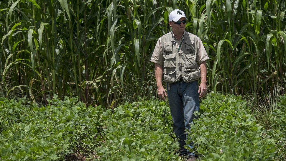 Michigan State University researcher Luis Flores stands in a bean field in Haiti.
