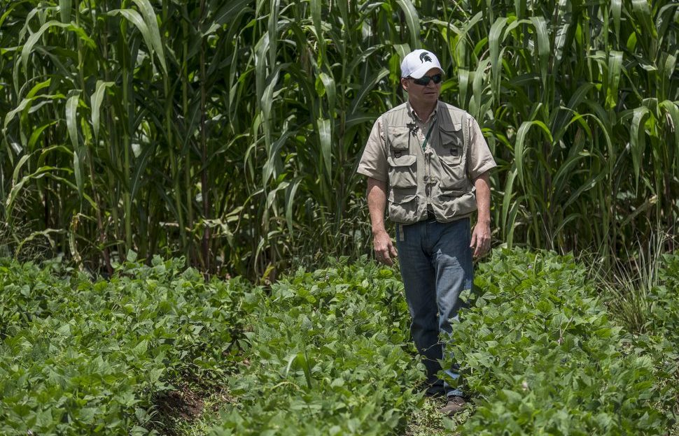 Michigan State University researcher Luis Flores stands in a bean field in Haiti.