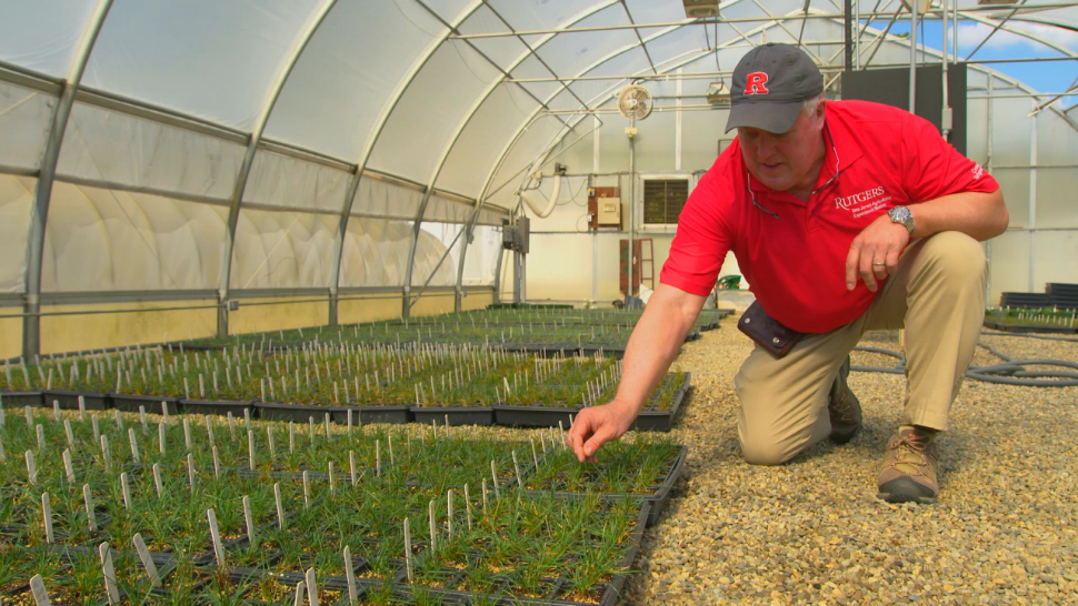 Rutgers University plant biologist working in the Center for Turf Grass Science