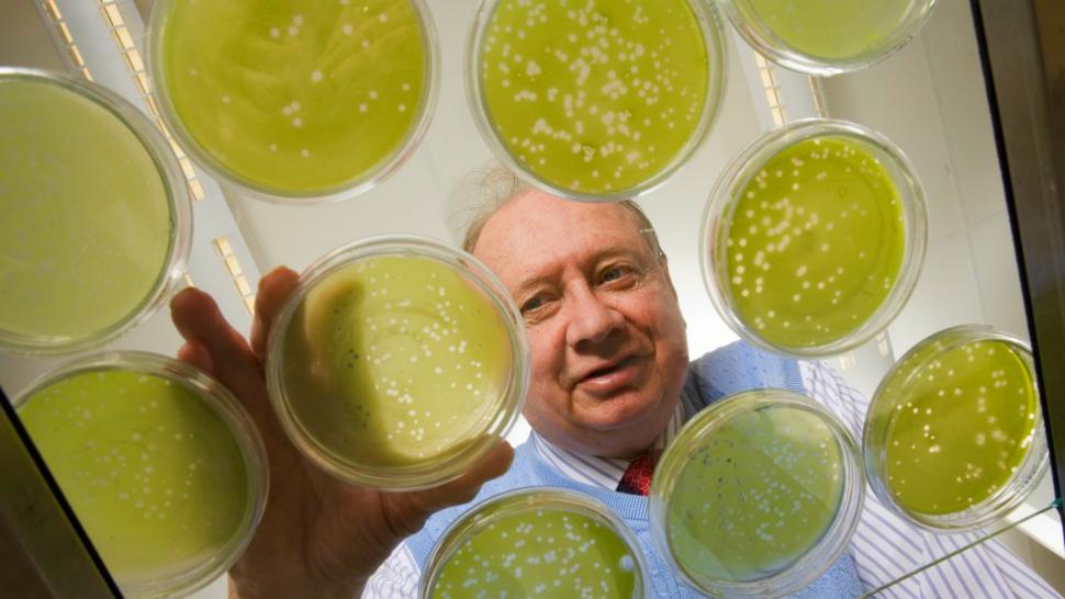 University of Nebraska-Lincoln professor Jame Van Etten works on petri dishes of algae