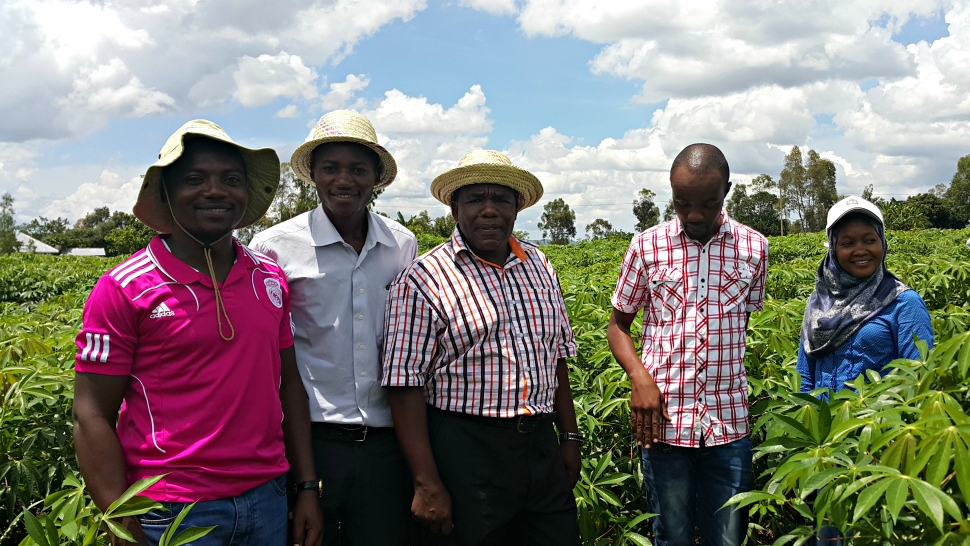 MARI scientists examining virus_free cassava in the field