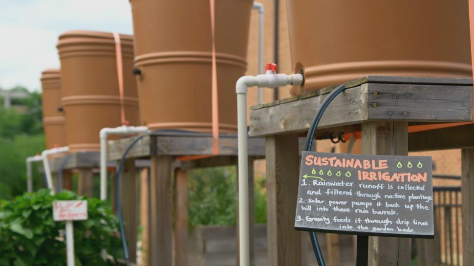 Rain barrels in the University of Maryland Community Learning Garden