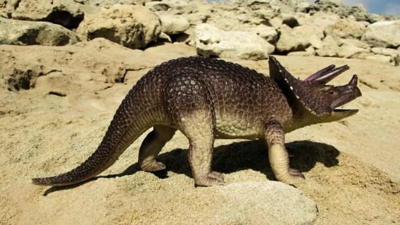 A terrifying triceratops roams a desert landscape.