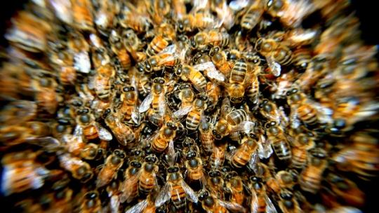 That's a colony of bees.
