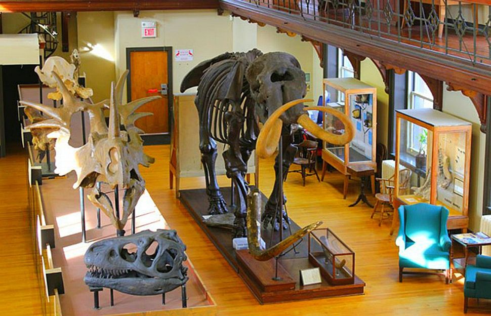 The main hall of Rutgers University's Geology Museum with various fossil skeletons