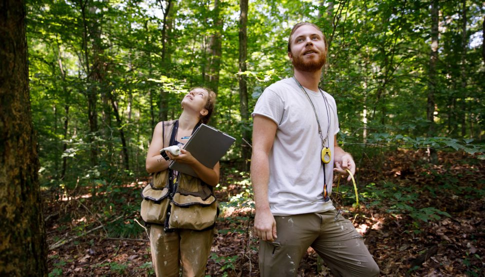 IU forest ecology technicians Aubree Keurajian and Matthias Gaffney gaze up at the forest canopy during their work recording the size and location of every tree over 10 centimeters in diameter in Lilly-Dickey Woods
