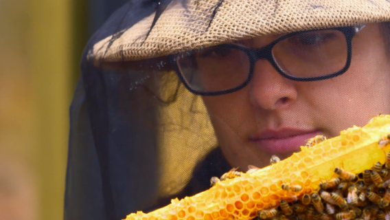 A researcher at the University of Minnesota's Bee Lab looks at bees on a piece of honeycomb.