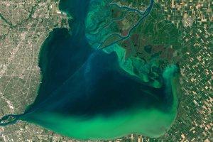 A cyanobacteria bloom on Lake Erie