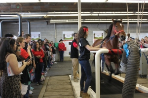 Work being done at the Rutgers Equine Science Center