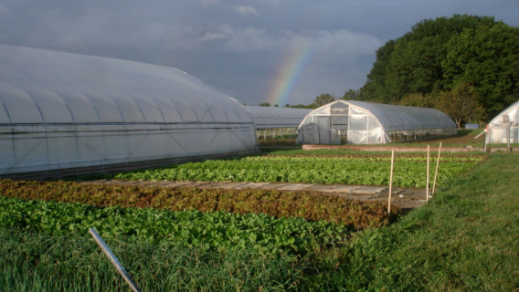 The Michigan State University Student Farm