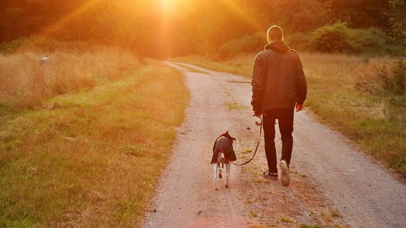 A man walking with his dog down a country road.