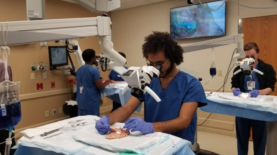 University of Wisconsin microsurgery residents training on blue-blood perfused chicken thighs