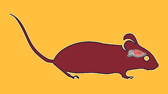 A drawing of a mouse with a diagram of its brain.