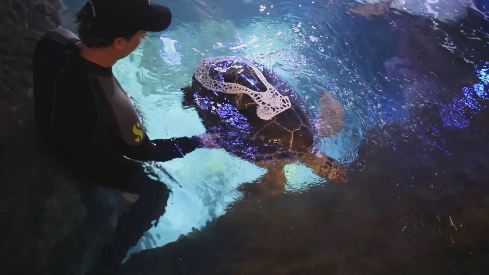 How Minnesota engineers helped a sea turtle swim straight: BTN LiveBIG